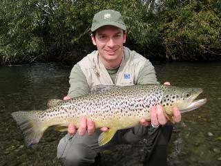 Beautifully mark Canterbury Brow Trout