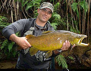 Trophy Fish like this 'Monster' are available from our trophy expert Miles Rushmer